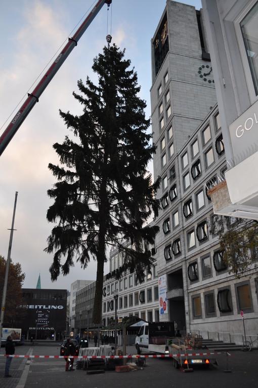 notter holztransporte gmbh weihnachtsbaum stuttgart. Black Bedroom Furniture Sets. Home Design Ideas